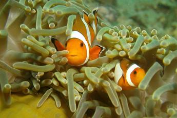 Experience Exotic Sea Life